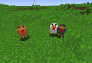 カラフルな鶏さん