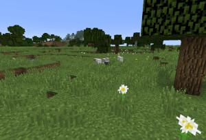 羊のいる草原