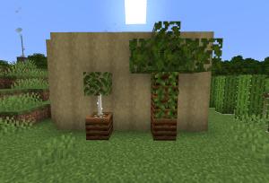 植木鉢とか木とか
