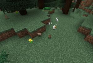 ウサギとニワトリを襲う