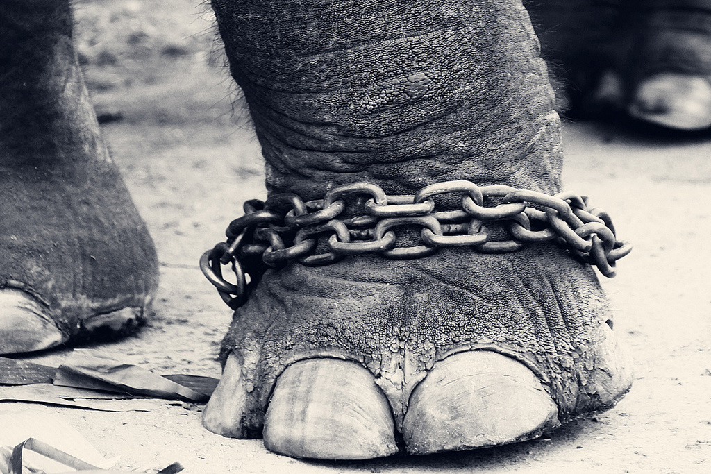 Ringling Bros. and Barnum & Bailey Circus shuts down after 146 years, bogusly blames lack of elephants
