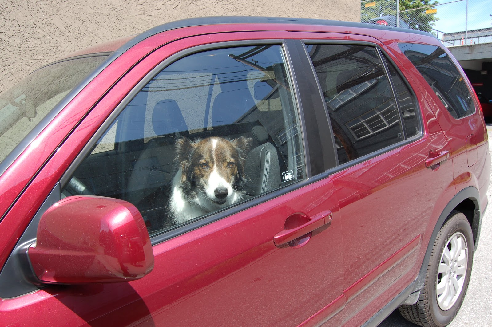 Live in California? You can now legally break into a car to save a trapped animal