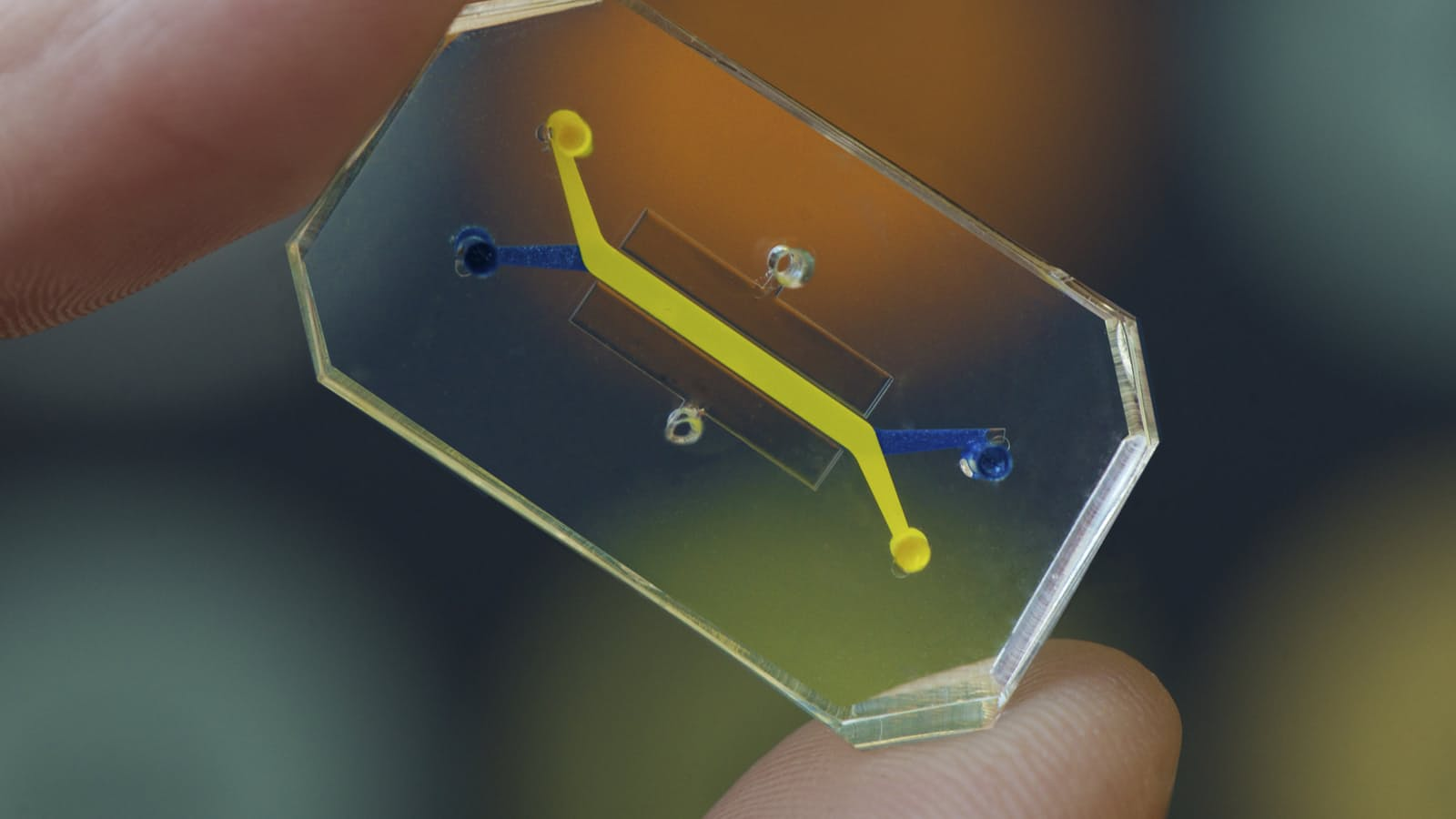 Organs-on-chips point to a brighter future for lab animals