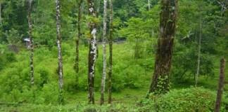 Vegetación Abundante, origen del Carbón Mineral