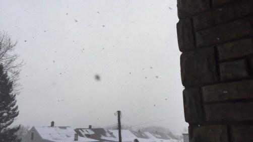 Heavy Snow Flakes (February)