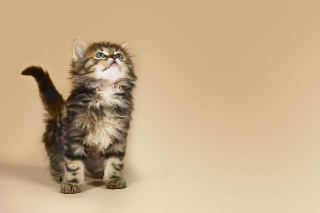 Is Pet Insurance a Good Idea?