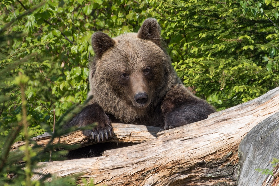Plan for a Bear Market – How to Stay on Track (and Sleep Well)