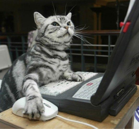 """Résultat de recherche d'images pour """"chat ordinateur"""""""