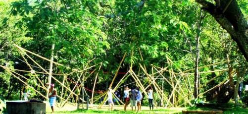 Bamboo_20120326_040