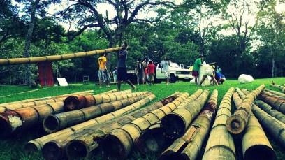Bamboo_20120410_057