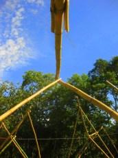 Bamboo_20120410_063