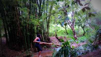 Bamboo_20120410_070