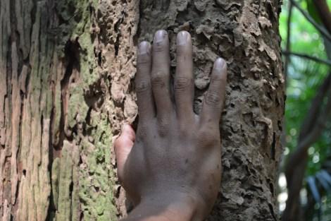 Formigas são repelente natural, Amazônia, 2014, por LP