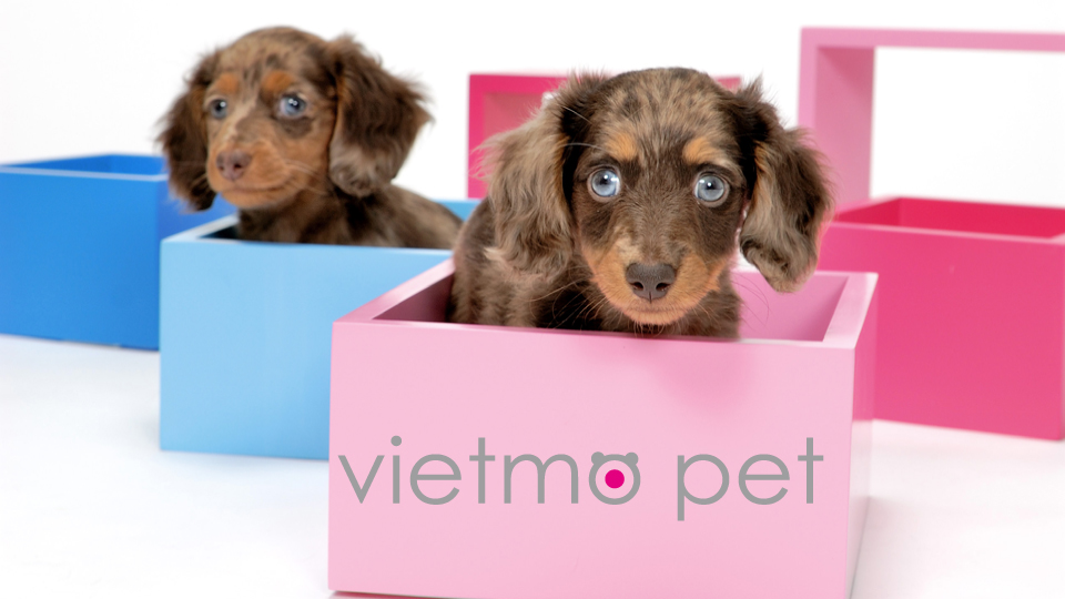 Vietnamese exporter for our Japanese pet store chain client