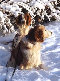 vi som gillar snö