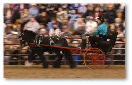 Illinois Horse Fair 2014