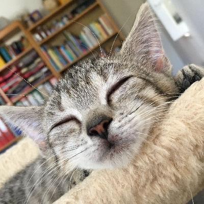 Voraussetzungen, die eine Pflegestelle für Katzenbabys erfüllen sollte.