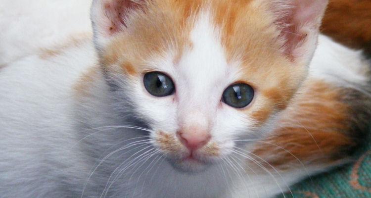 Pflege von Katzenbabys über vier Wochen