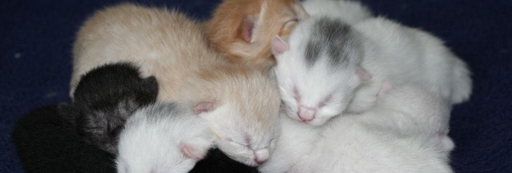 Was brauche ich für die Pflege von Katzenbabys?
