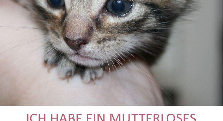 Katzenbaby gefunden - was ist zu tun?