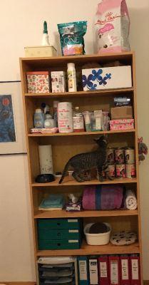 Katzenregal - Zubehör für eine Pflegestelle