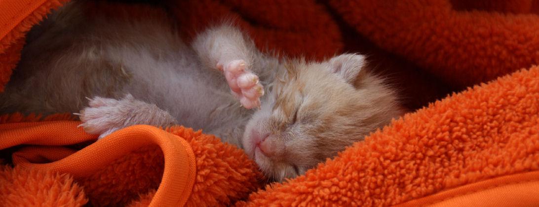 miniKatz - liebevolle Aufzucht von verwaisten und ausgesetzten Katzenbabys.