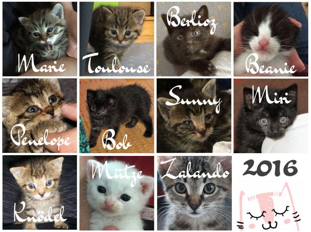 Pflegekatzen bei miniKatz 2016
