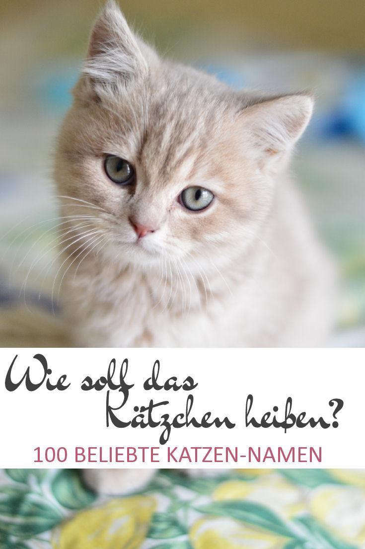 100 beliebte Katzennamen