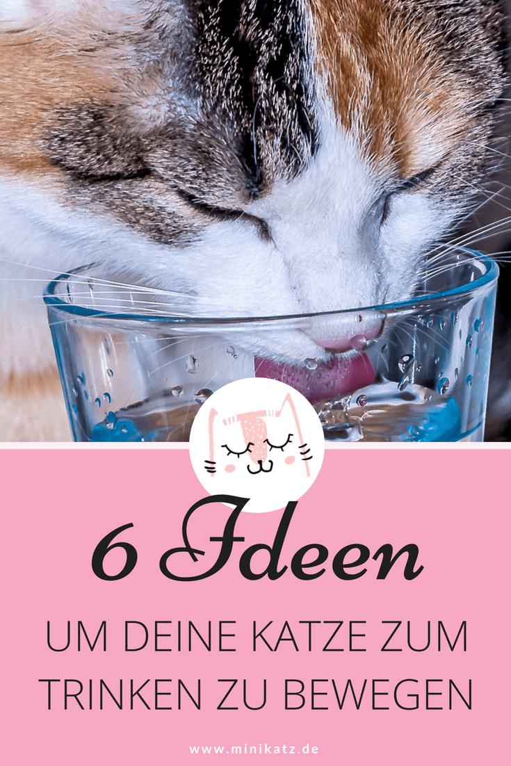 Hilfe Meine Katze Trinkt Zu Wenig 6 Ideen Um Deine Katze Zum