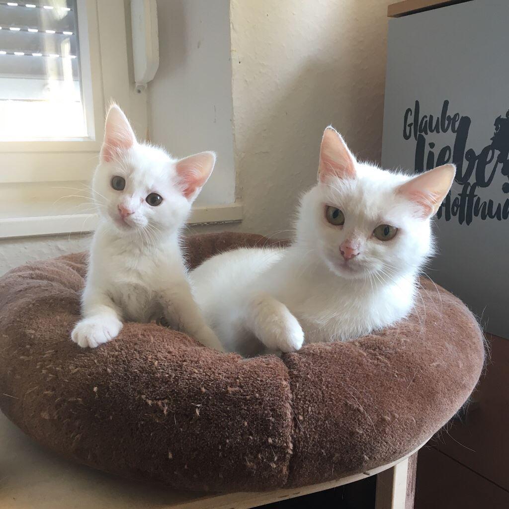 Mama Glory und Baby Gizma - zwei weiße Schönheiten suchen ein Zuhause.
