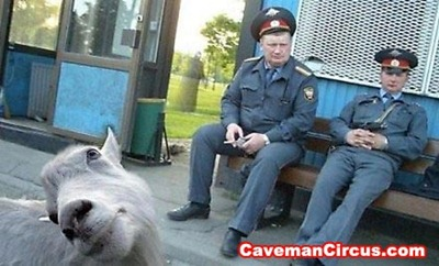 10_greatest_animal_photobombs_of_all_time_6