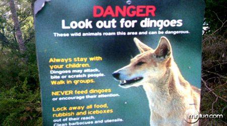 Placa na Austrália alertando sobre o perigo dos dingos