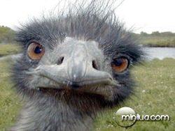 avestruz03
