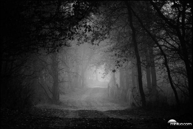 the-forest-path-41130