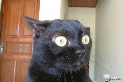 gato_tenso