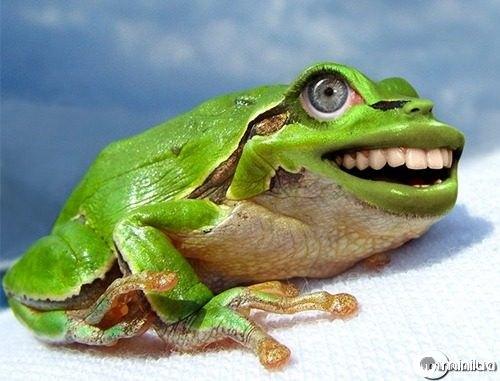 Laughing-Frog--21620