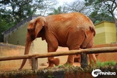 Zoo São Paulo 043