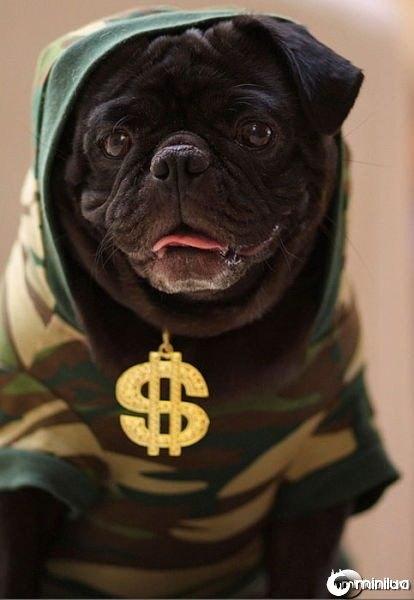gangster_pugs_640_09