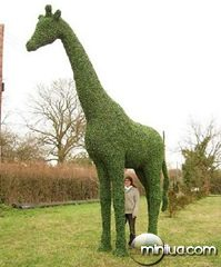 how-to-decorate-your-yard12