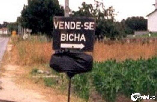images_fotos_bicha