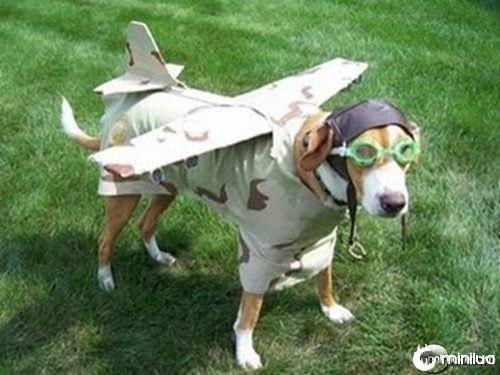 cachorro-fantasiado
