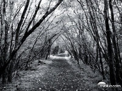 Black and White forest path