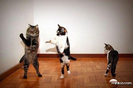 animais engraçados.jpg (3)
