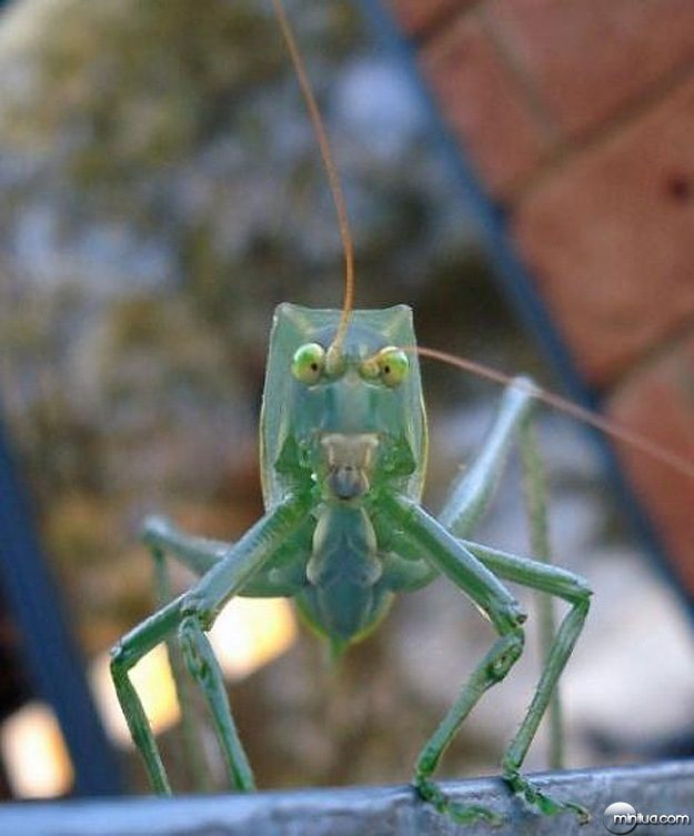 Alien-Looking-Insect-Bugs-8