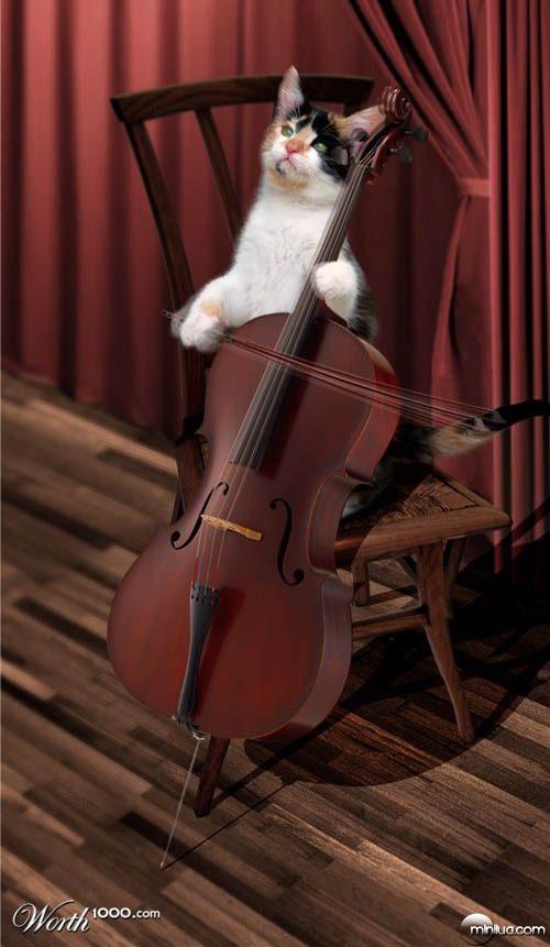 cat_cellist