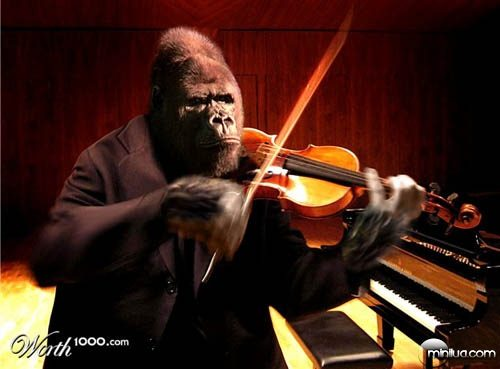 gorilla_violin