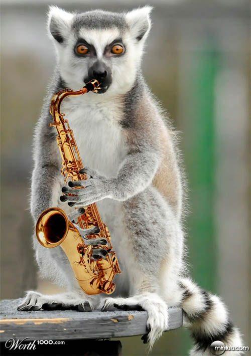 lemur_saxophone