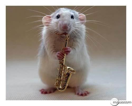 rat_saxophone