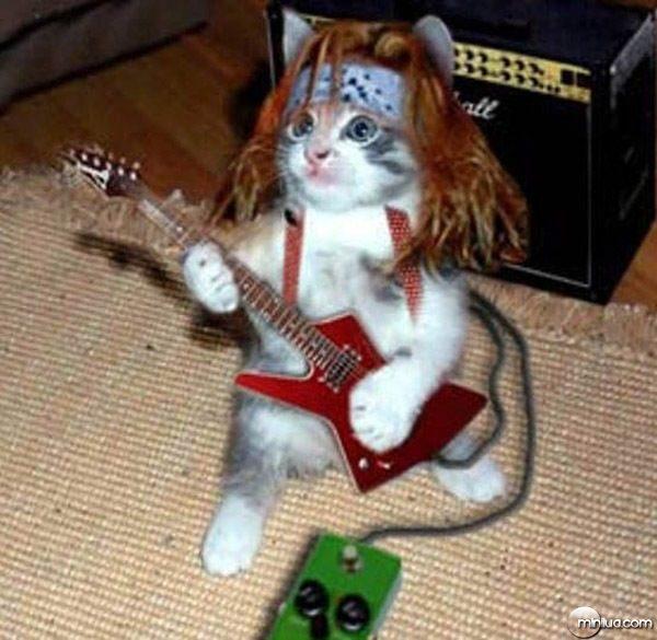Rock del gato