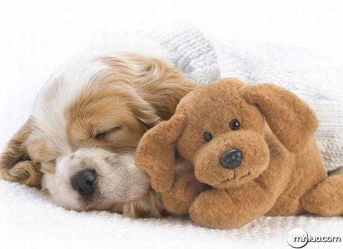 animais-fofos-dormindo-12